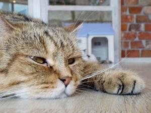 猫リラックス